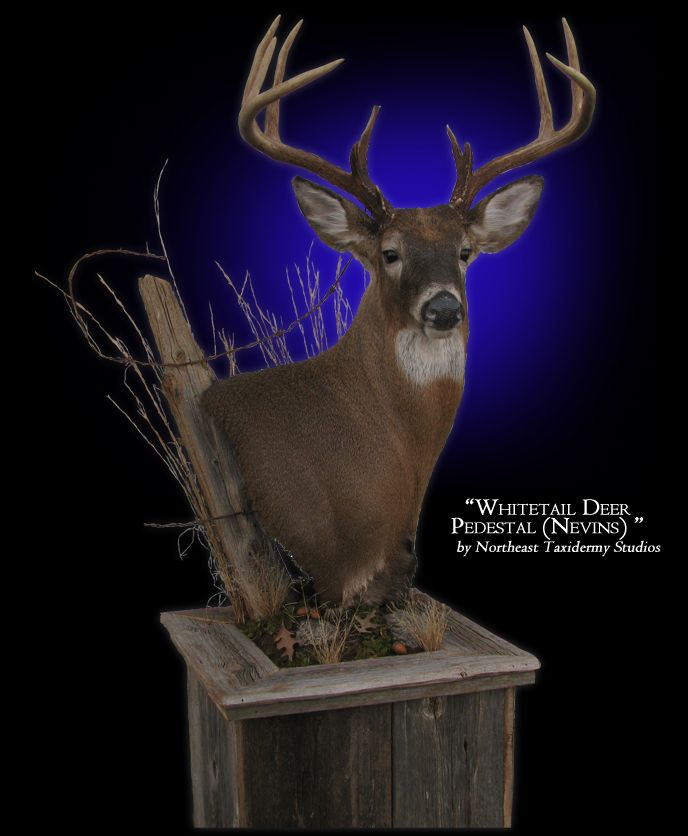 Deer Pedestal Mount Whitetail Deer Pedestal Mount
