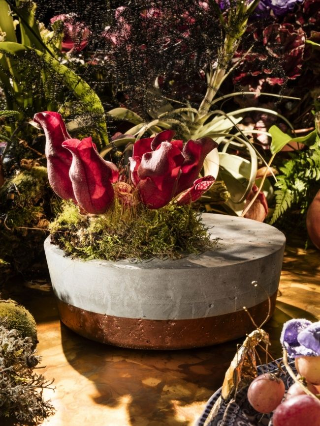 11 Days To Christmas: Planter · Days To ChristmasChristmas PlantersFlower  Food12 DaysChristmas InspirationHouse PlantsIndoor House PlantsContainer  Plants