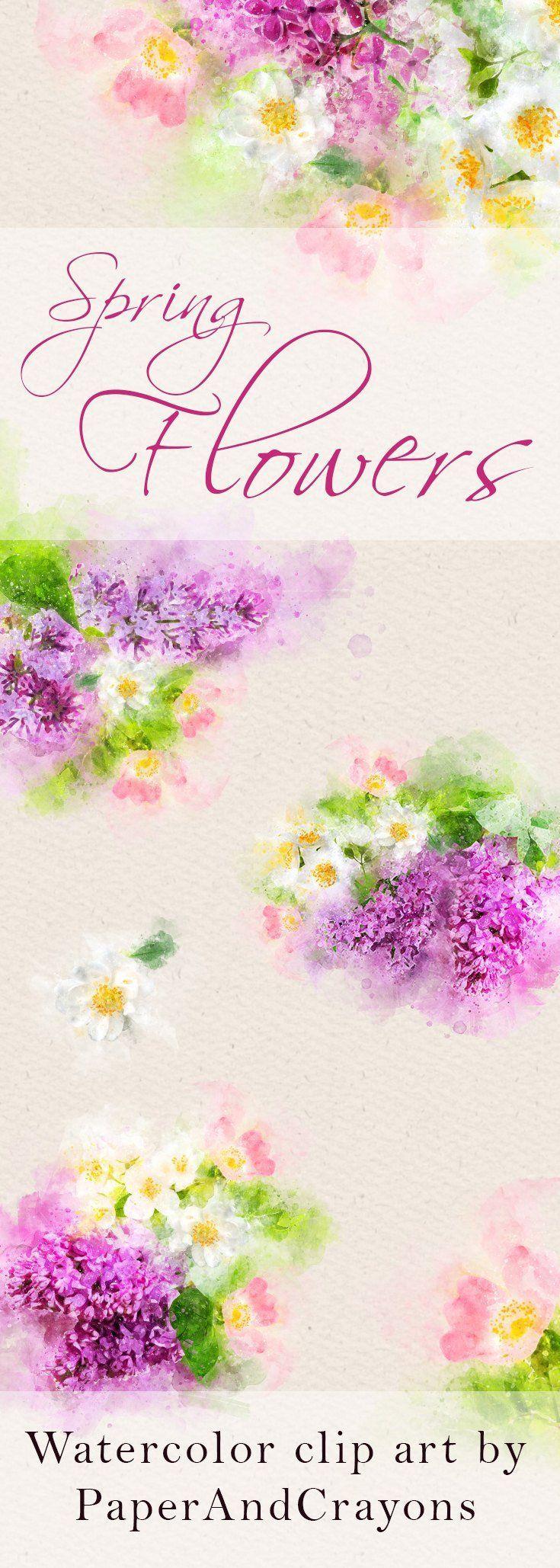Spring Flowers Clipart Watercolor Clip Art White Purple Graphics