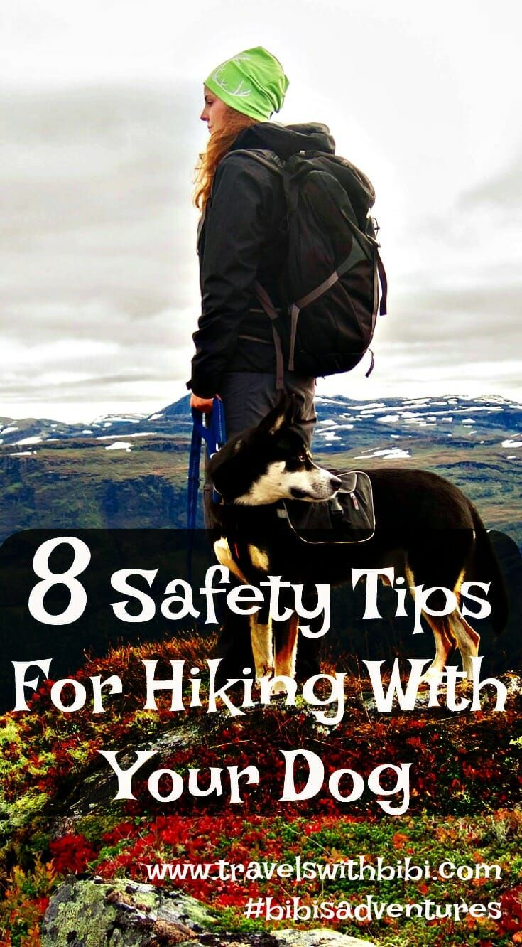 Photo of 8 Safety Tips For Hiking With Your Dog