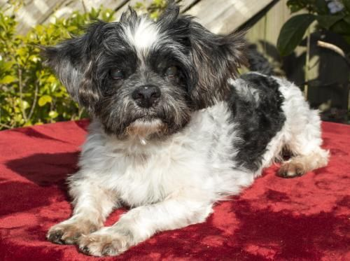 Adopt Nelson S Video On Adoptable Small Breeds Small