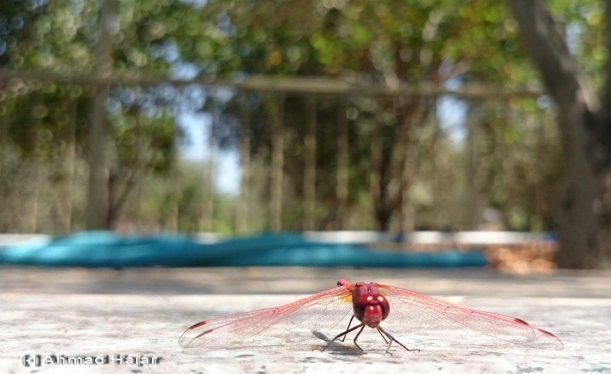 استراحة إحدى الحشرات الطائرة