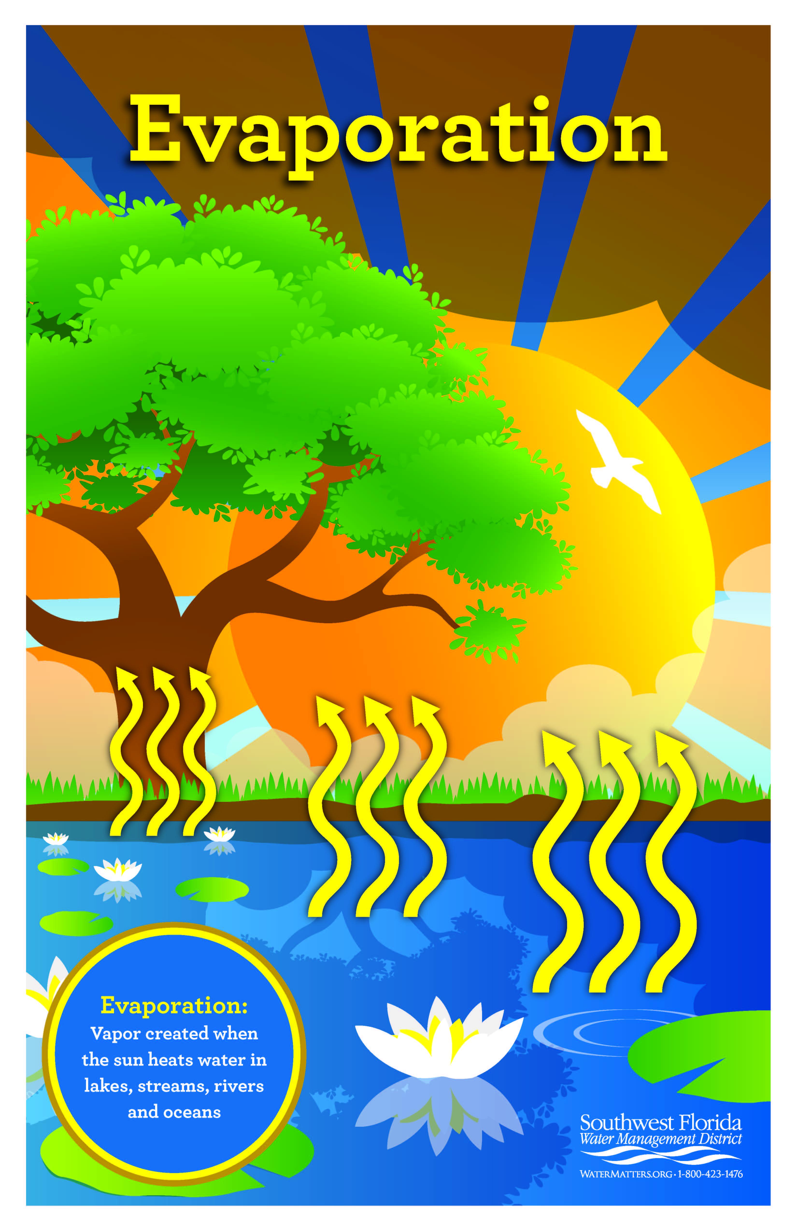 Order Or Download An Evaporation Poster