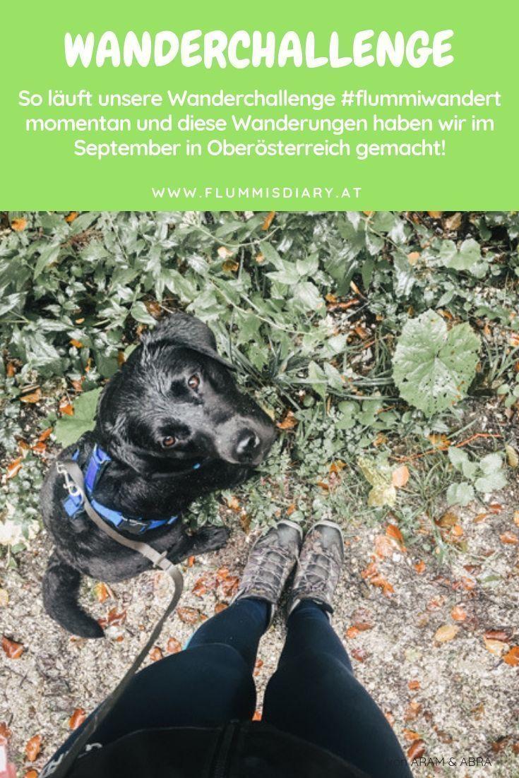 Wandern Mit Hund In Oberosterreich Fazit September 2018 In 2020 Hunde Urlaub Mit Hund Hundehaltung