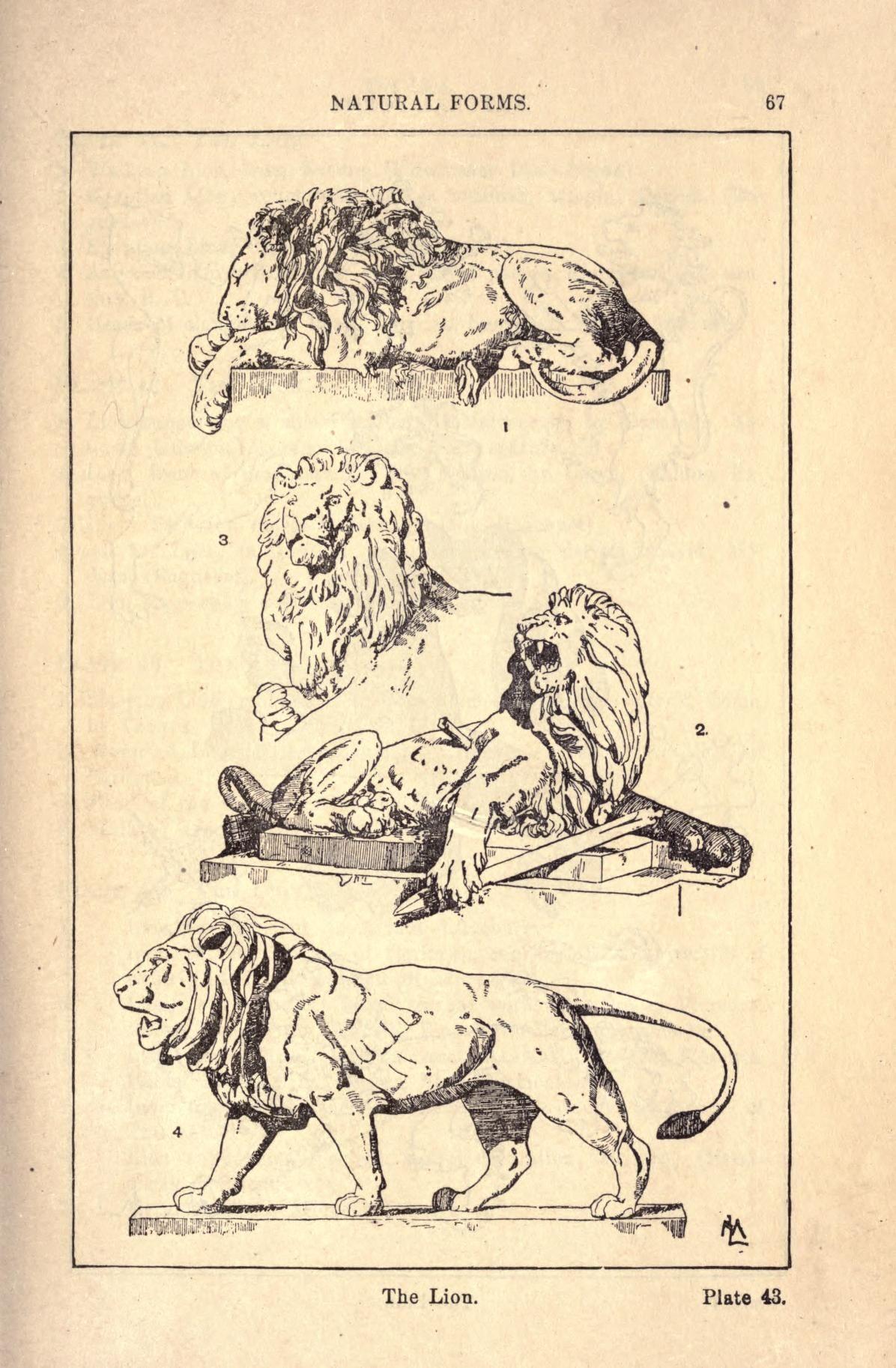 A Handbook Of Ornament Lion Sketch Lion Art Art