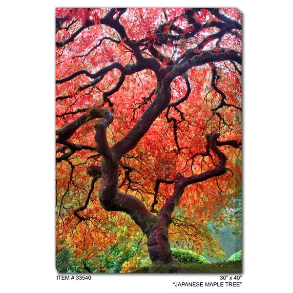 #33540 Japanese Maple Outdoor Wall Art | Outdoor wall art ...