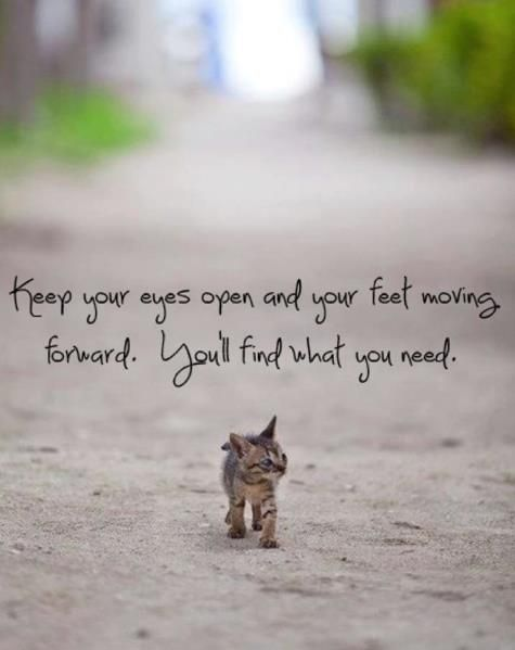 Keep Your Eyes Open And Your Feet Moving Forward You Ll Find What You Need Kittens Kittens Cutest Crazy Cats