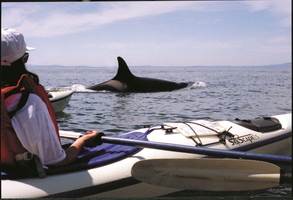 Activities Adventures Orcas Island Chamber Of Commerce Kayak Tours Orcas Island Kayaking