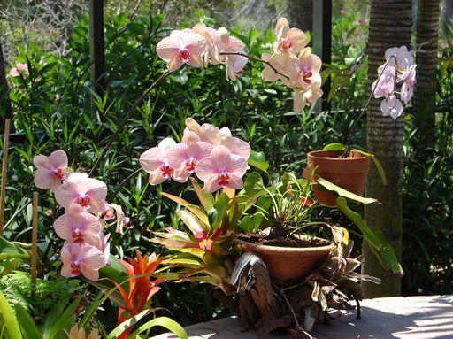 orchideen pflege   zimmerpflanzen   zierpflanzen   garten, Haus garten