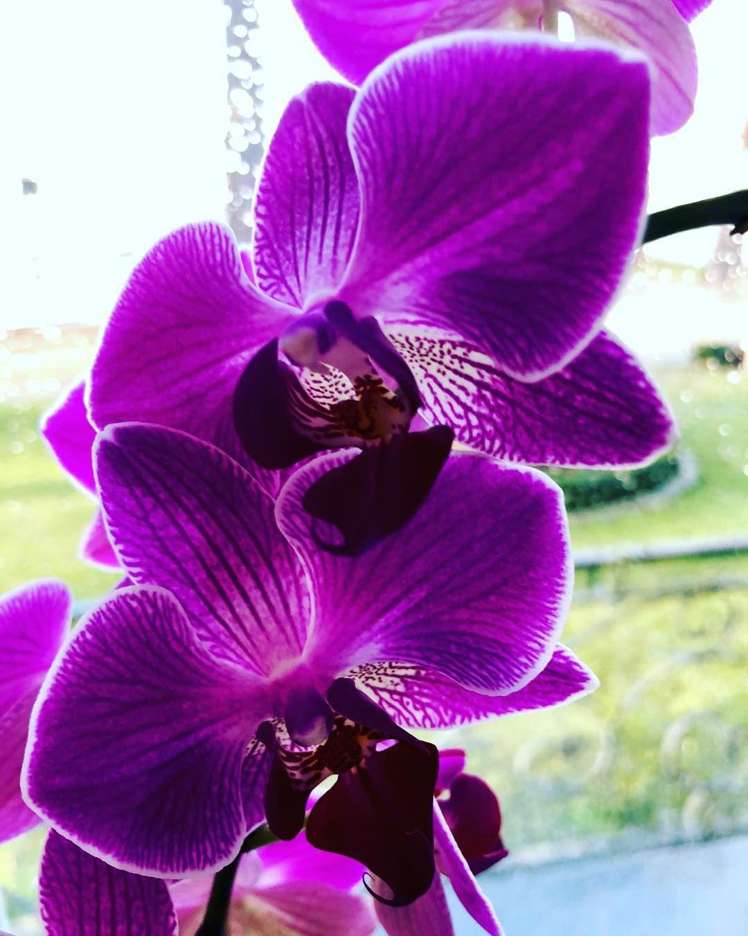 How to care for orchids so they live u grow them correctly so they