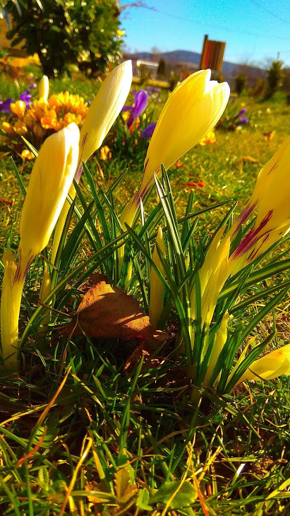 Kwiaty Flowers Polish Flowers Polskie Kwiaty Kwiatki Kwiaty Ogrodowe Kwiaty Polne Kwiaty Lesne Kwiaty Wiosenne W Google Photos Photo Photo And Video