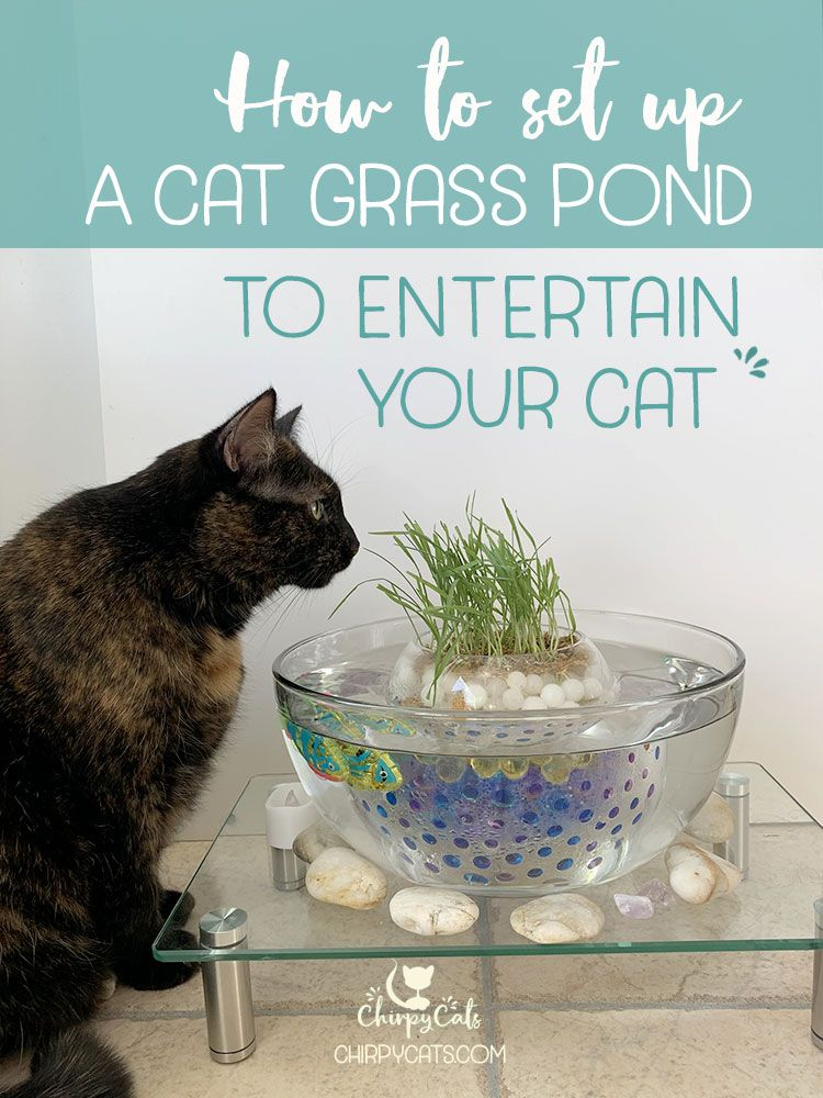 How To Make This Unique And Simple Cat Grass Pond Using Water Beads Cat Grass Cat Patio Cat Life Hacks