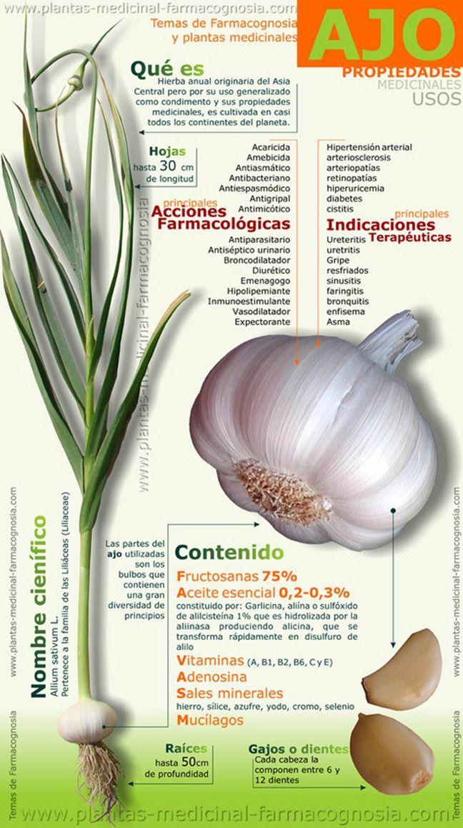 Las Propiedades Medicinales Del Ajo Infografía Hierbas Curativas Planta De Ajo Nutrición