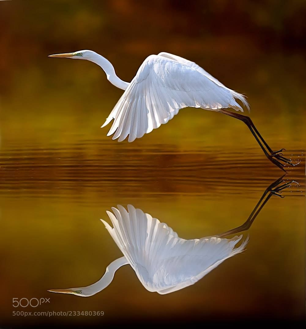 Mirror (Stefano Ronchi / Caravaggio / Italia) #Canon EOS 5DS R #animals #photo #nature