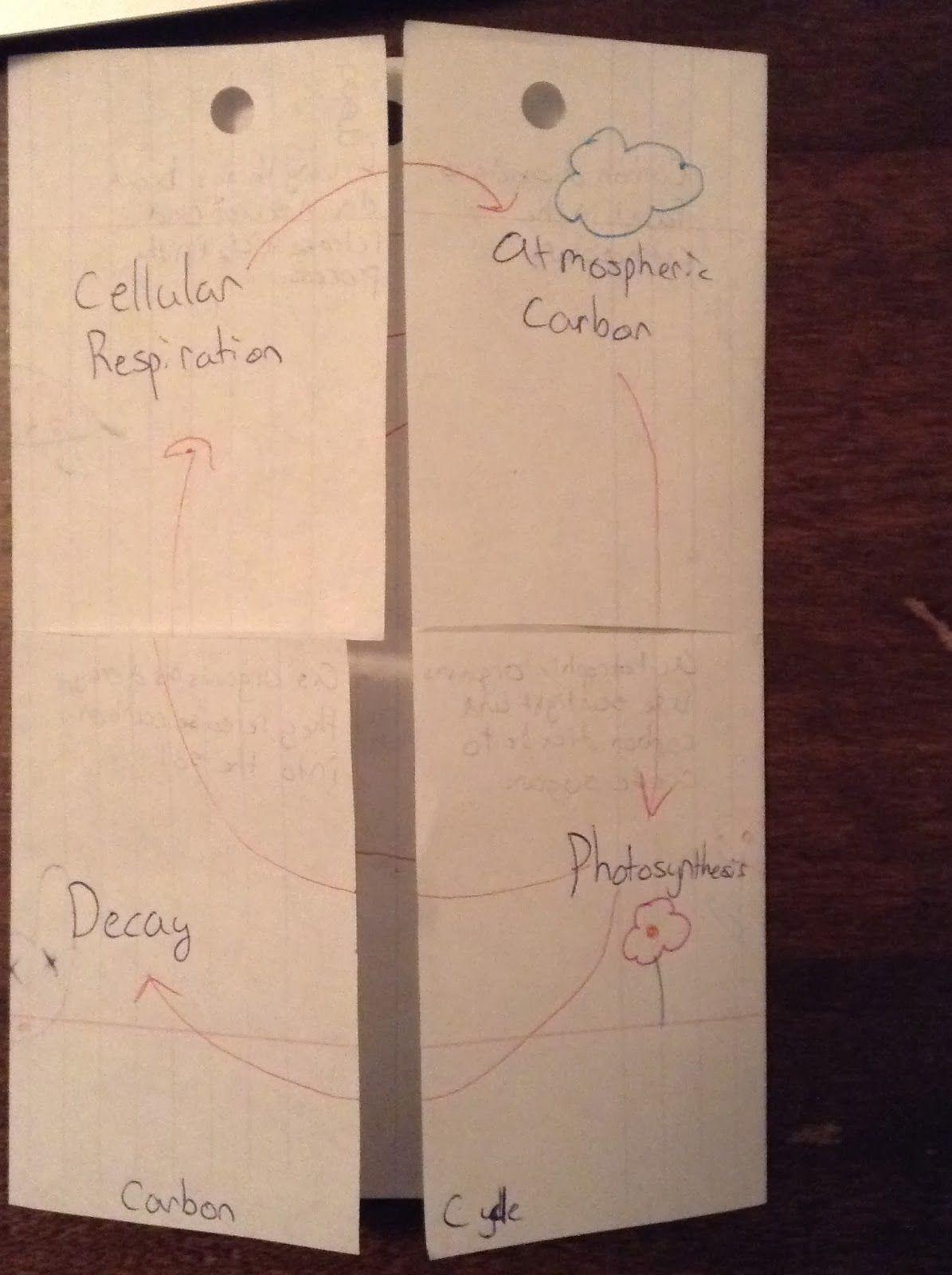 Biology Education Idea Echange Nitrogen And Carbon Cycle Foldable