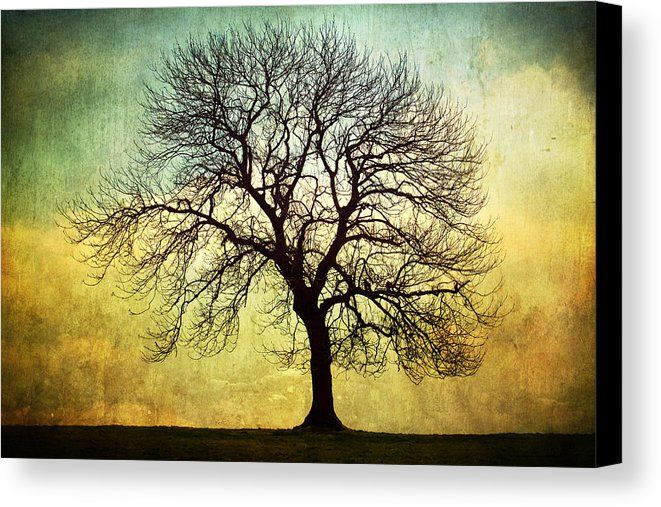 Digital Art Tree Silhouette Canvas Print / Canvas Art by Natalie Kinnear