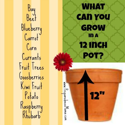 What Can You Grow In A 12 Pot Planting Depth Revealed Growing Herbs Growing Vegetables Container Gardening