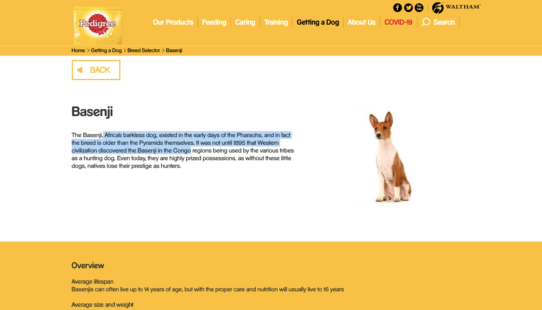 Basenji Small Medium And Big Dog Breeds Pedigree Uk In 2020 Big Dog Breeds Big Dogs Dog Breeds