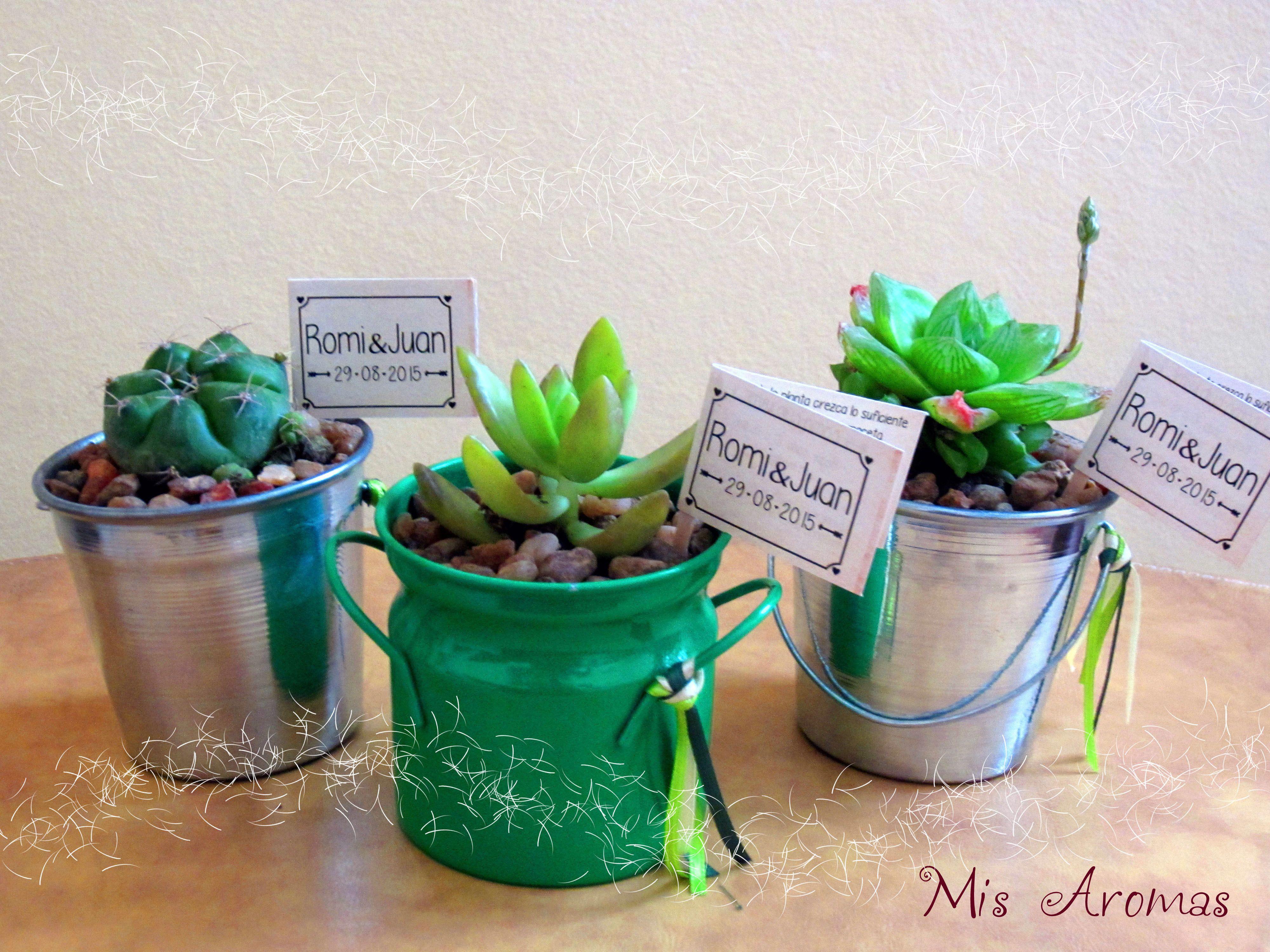 Suculentas en baldecitos de zinc souvenirs con for Curso cactus y suculentas