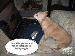 Pin On Dog Gone Cornor