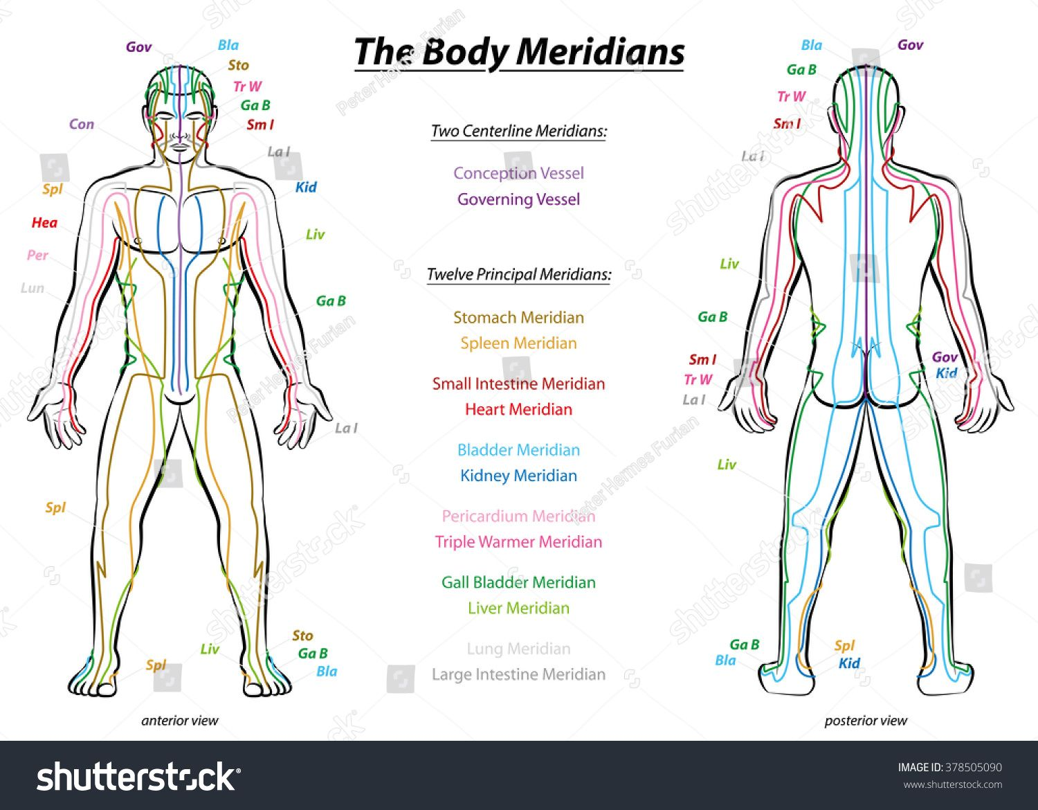 Meridian System Chart - Male body with principal and centerline ...