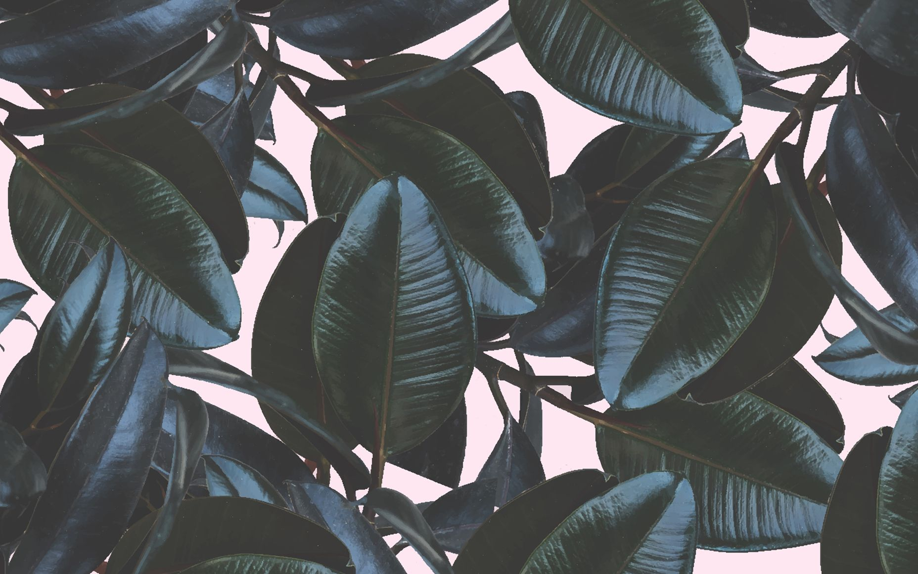 Summer Wallpapers Tropical wallpaper, Macbook wallpaper