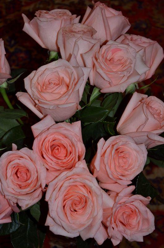 Яндекс.Фотки переехали   Цветы, Красные розы, Розы