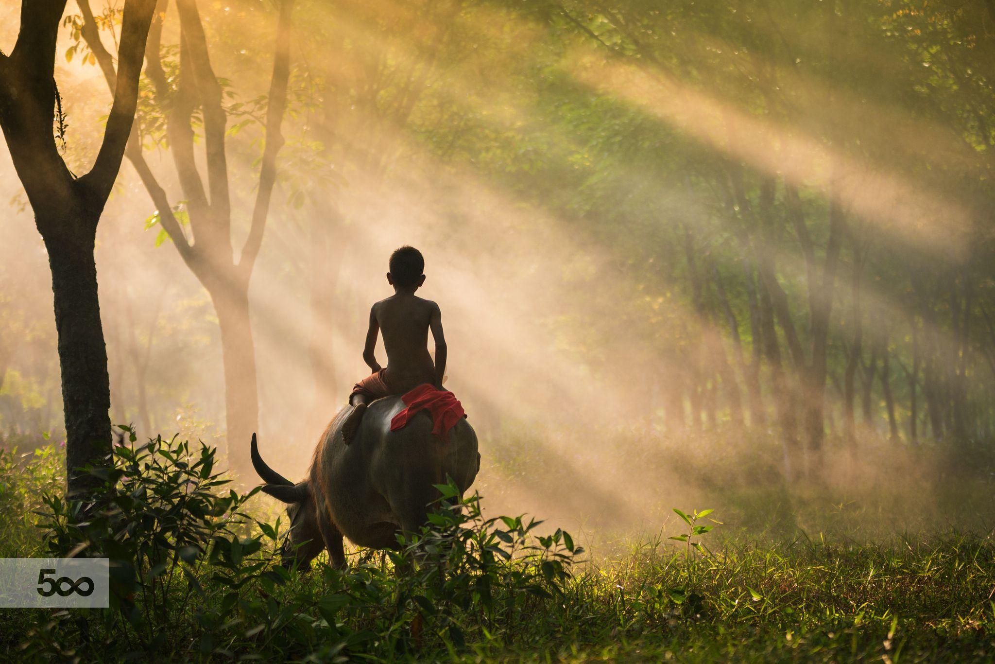 Foggy Morning by Mohd Firdaus Zulkefili / 500px