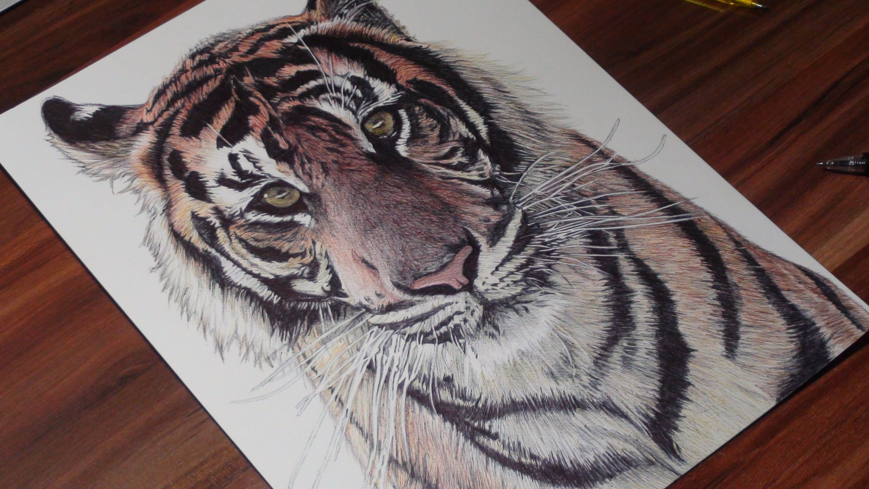 Realistic tiger ballpoint pen drawing freehand art
