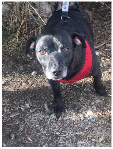 Adopt Tina On Petfinder In 2020 Dog Adoption Adoption Pet Adoption