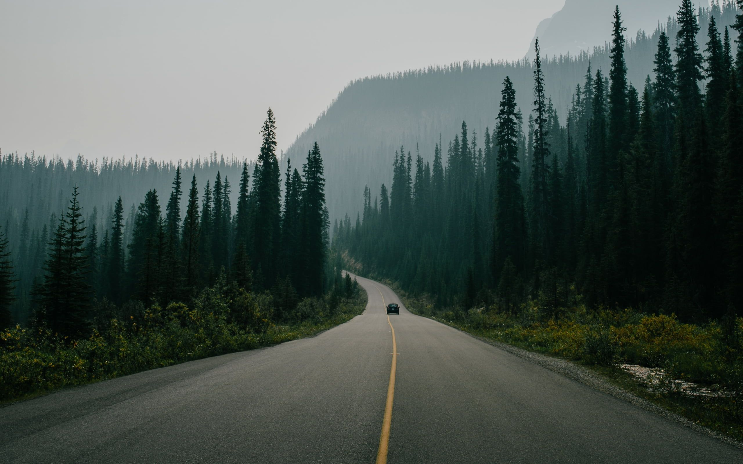 Road Surrounded With Trees Nature Landscape Road Trees Car Pine Trees Forest Morn In 2020 Landscape Wallpaper Tree Desktop Wallpaper Aesthetic Desktop Wallpaper