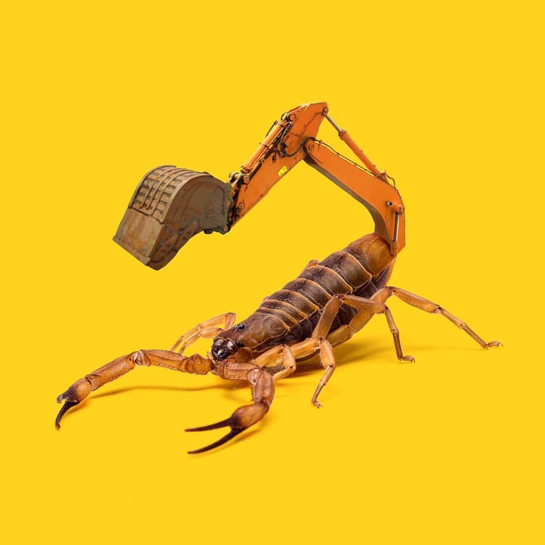 Digger Scorpion Lescreatonautes Scorpion Excavator Instaart Construction Animal Strasbourg Surrealism Artist Illyustracii Illyuzii Zheltyj Fon