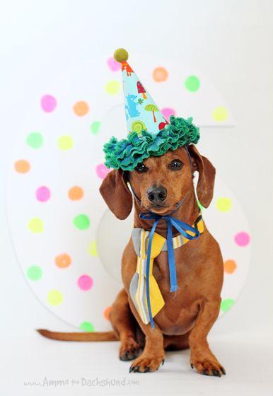 Birthday Week Ammo The Dachshund S 6th Birthday Happy Birthday
