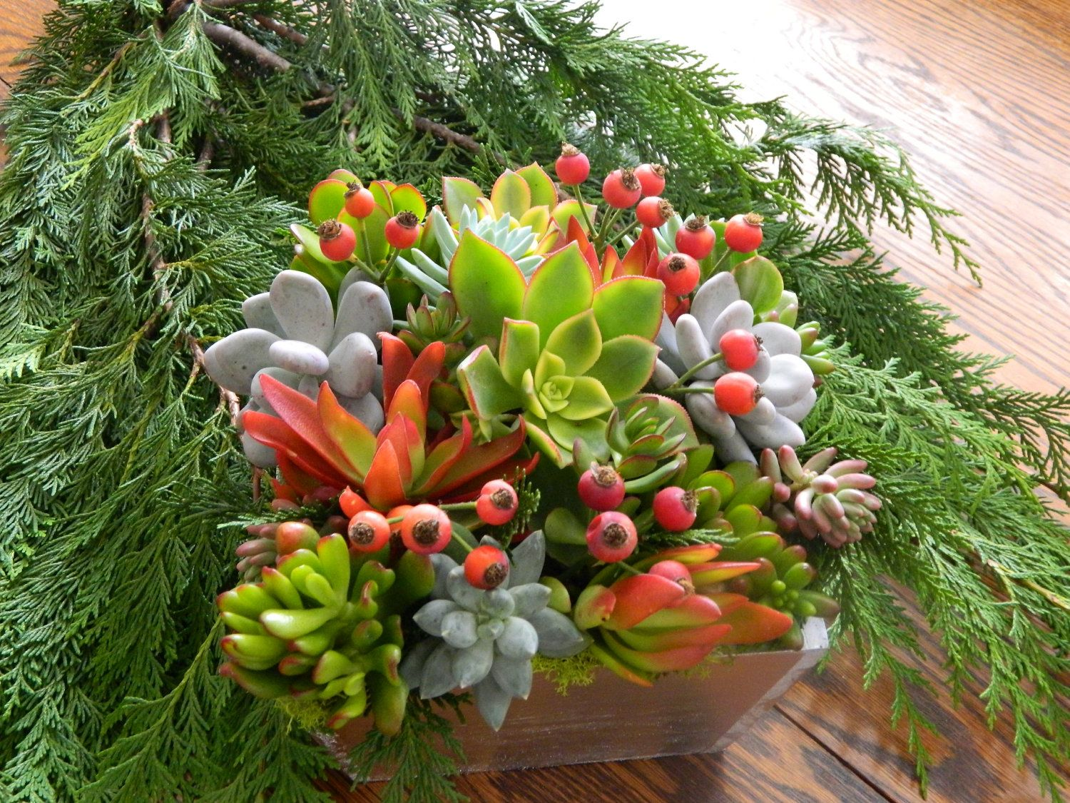 Christmas Succulent Centerpieces.Pin By Tanya Yachaina On Christmas Crafts Christmas