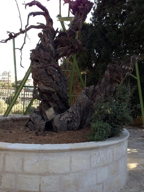 Hz İbrahimin altında oturrduğu sırada Lut kavmini helake giden meleklerce oğlu İshak'ın müjdelendiği balmut ağacı