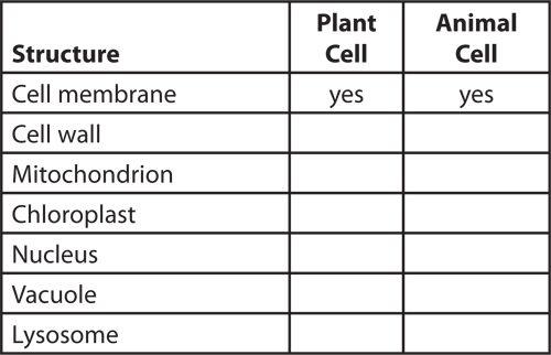 172c53b868e5d660b70cdfee79d37961  Th Grade Worksheets On Plant And Animal Cells on animal cell worksheet 5th, animal cell worksheet biology, plant and animal cell diagram 5th grade, animal cell worksheet high school, animal cell worksheet kindergarten,
