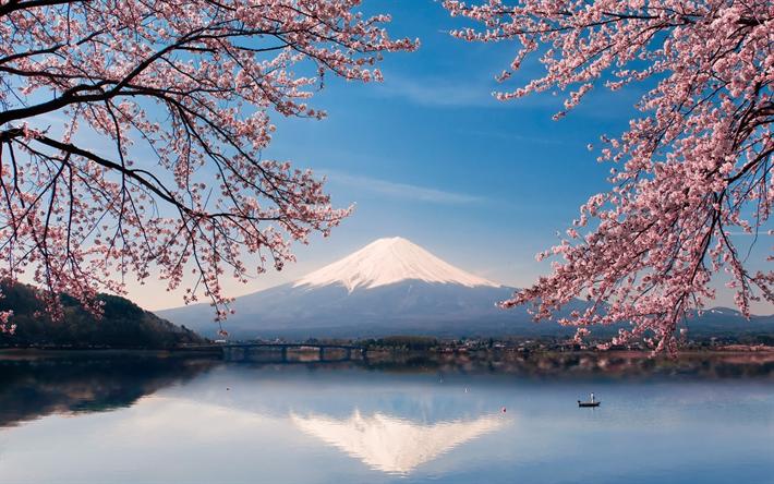 Download Wallpapers Fujiyama Stratovolcano Spring Sakura