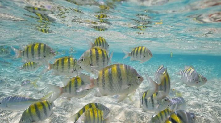 Fisk og koralrev ved Monte Cristi, Den Dominikanske Republik