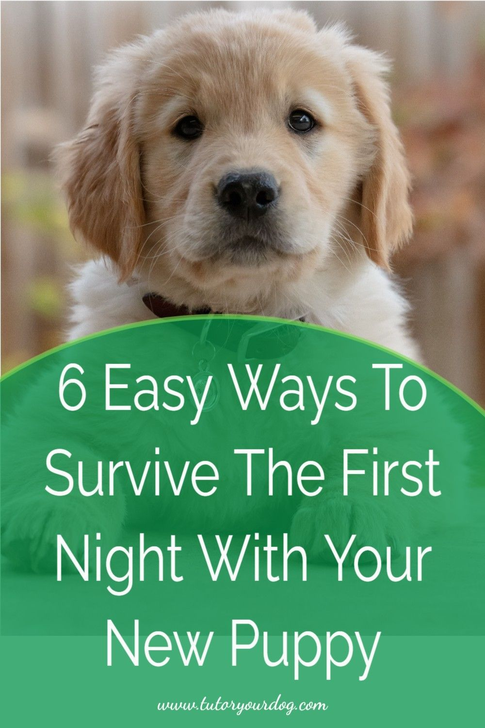 puppy first night home panting