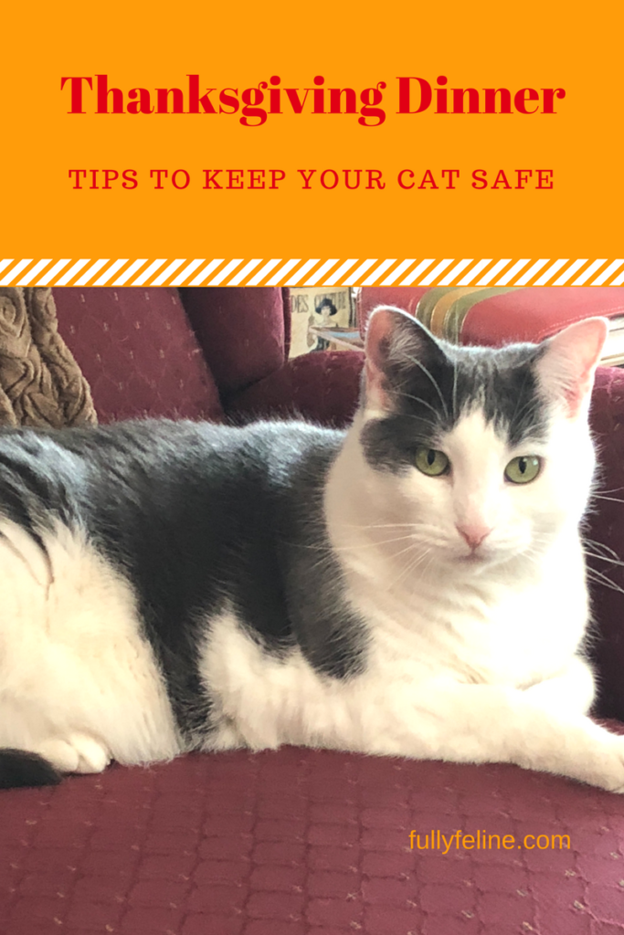 Keeping Your Cat Safe This Thanksgiving Cats, Stuffed