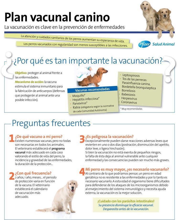 infecciones de perros no vacunados humanos