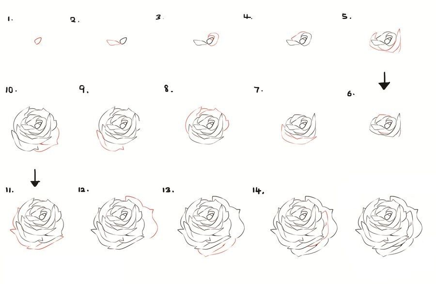 How To Draw Flowers And Trees In 2019 Roses Drawing