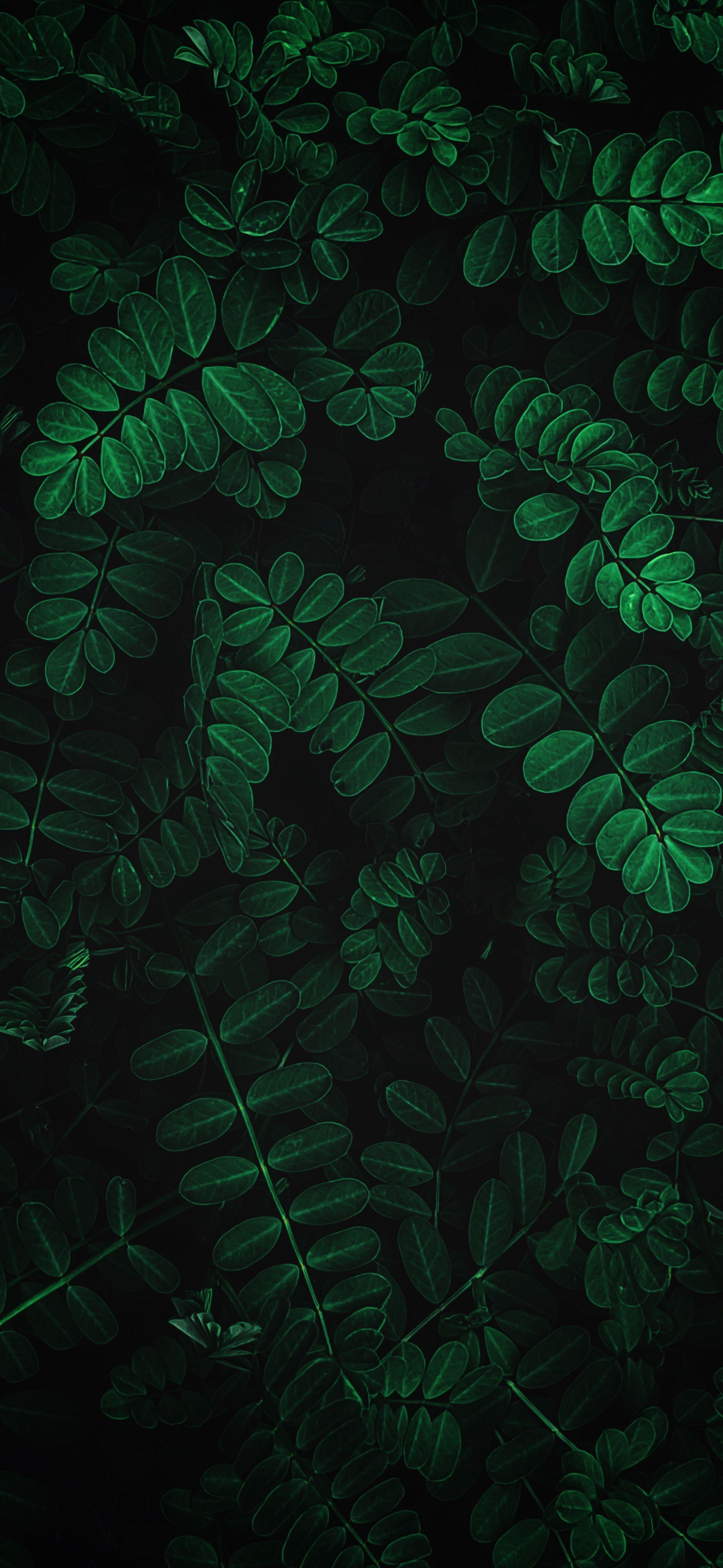 Iphone Wallpaper Various 385 Leaves Wallpaper Iphone Phone Wallpaper Leaf Wallpaper