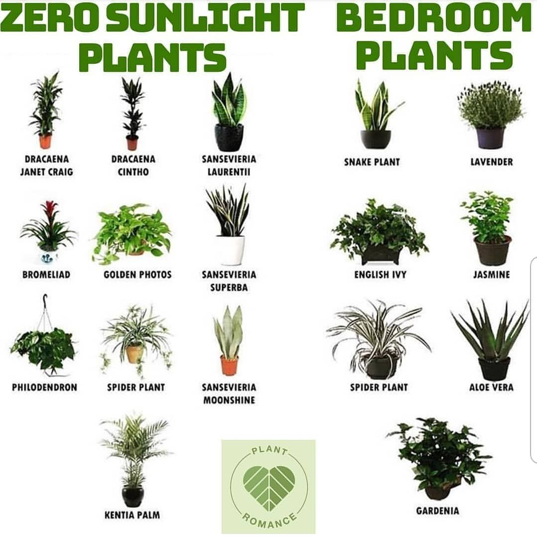 Zero Sunlight Hard To Kill Plants In 2020 Plant Decor Indoor