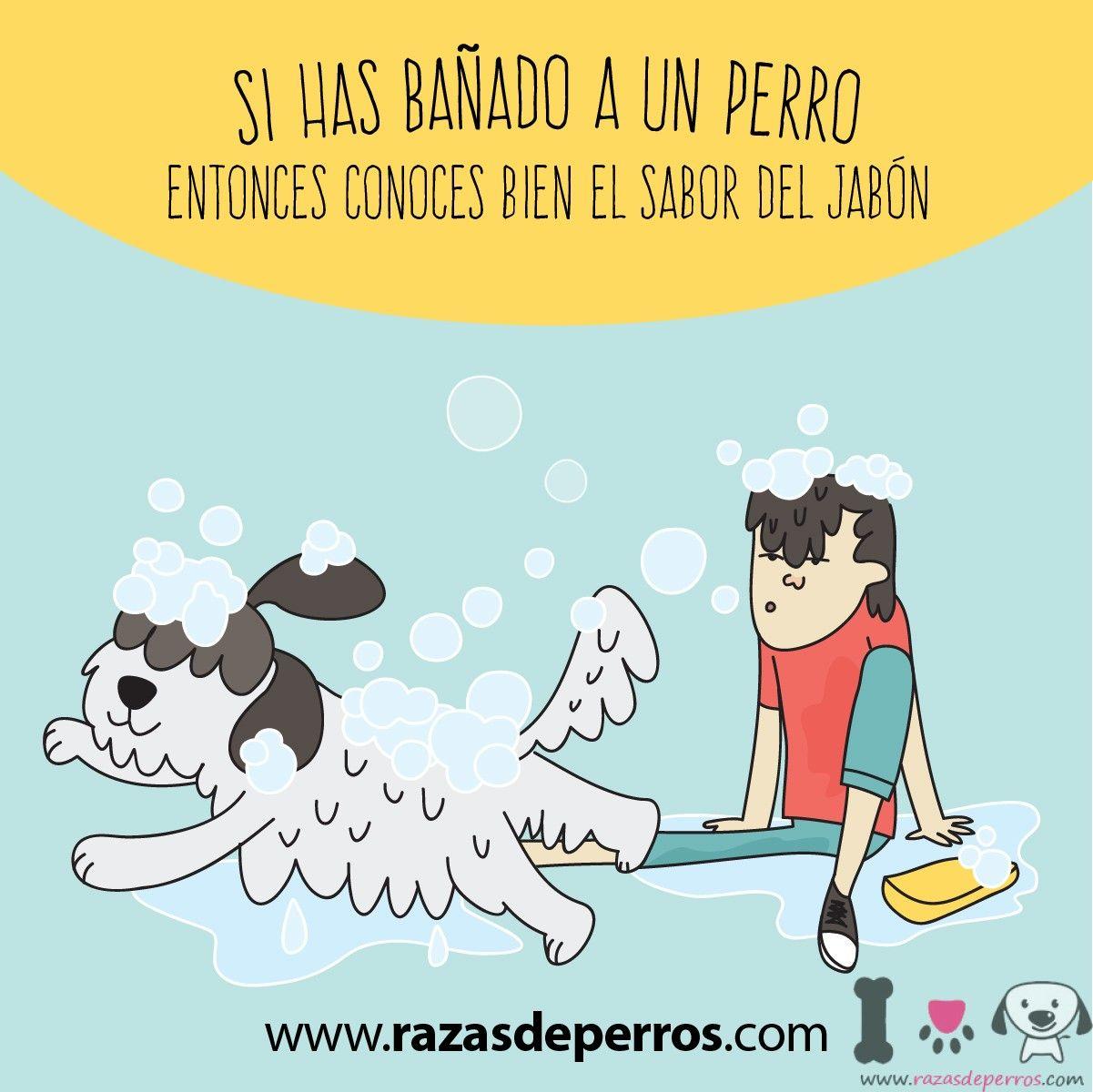 Dibujo De Perro Siendo Banado Por Su Dueno Perros Amantes De Perros Y Perros Divertidos