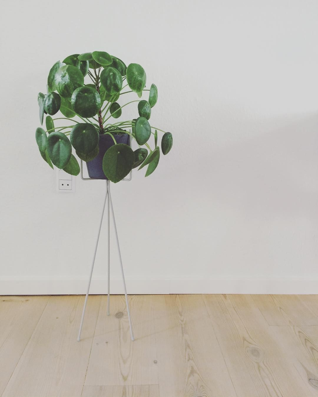 Superb Ferm LIVING Plant Stand In Light Grey Fits Perfectly Together With This  Beautiful Pilea Plant.