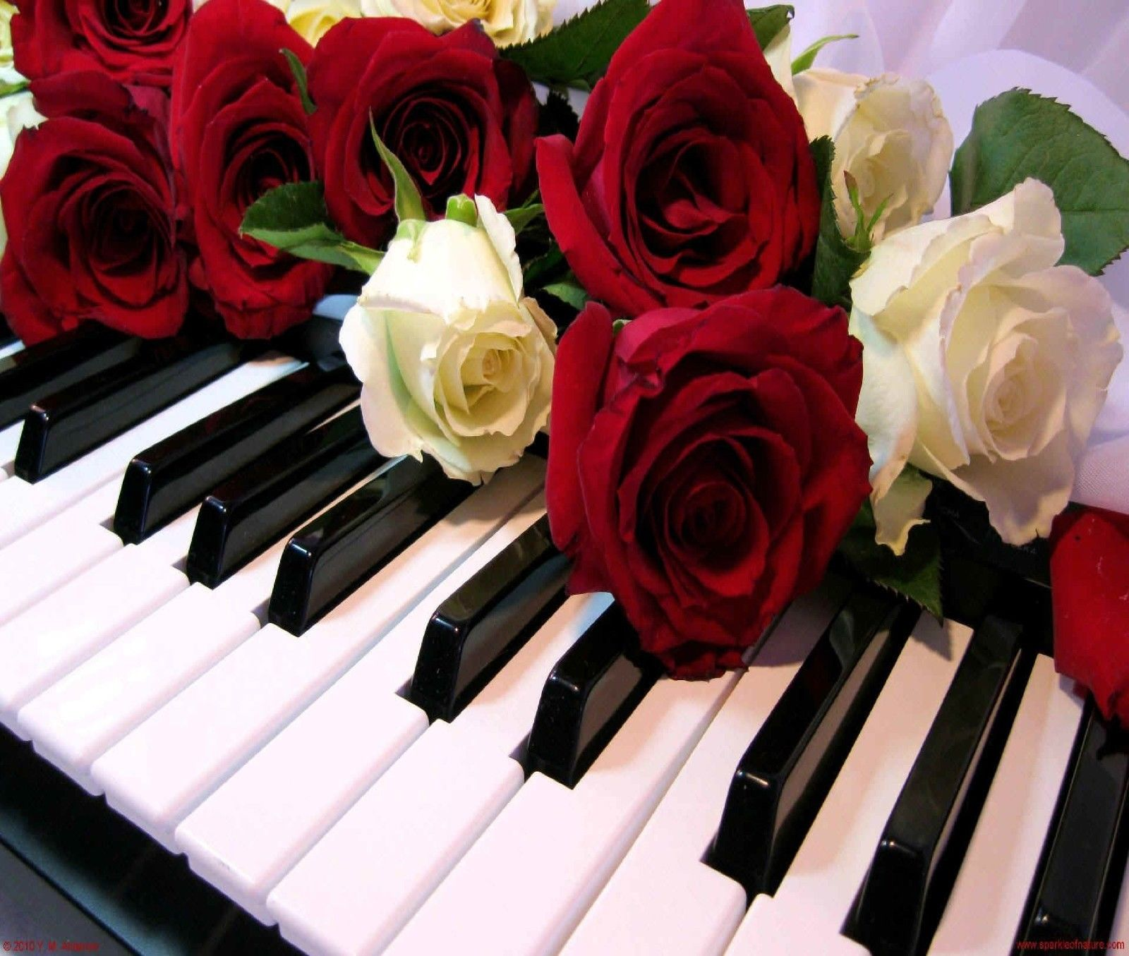 $9.49 - Piano Keys Red And White Roses Computer Mouse Pad ...