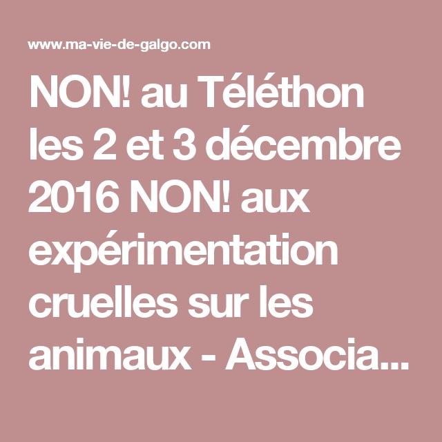 NON! au Téléthon les 2 et 3 décembre 2016 NON! aux expérimentation cruelles sur les animaux -  Association animale ma-vie-de-galgo