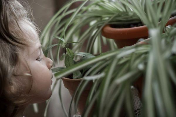 Kwiaty Doniczkowe Do Pokoju Dziecka Kinder Zimmer Pflanzen Zimmer Topfblumen