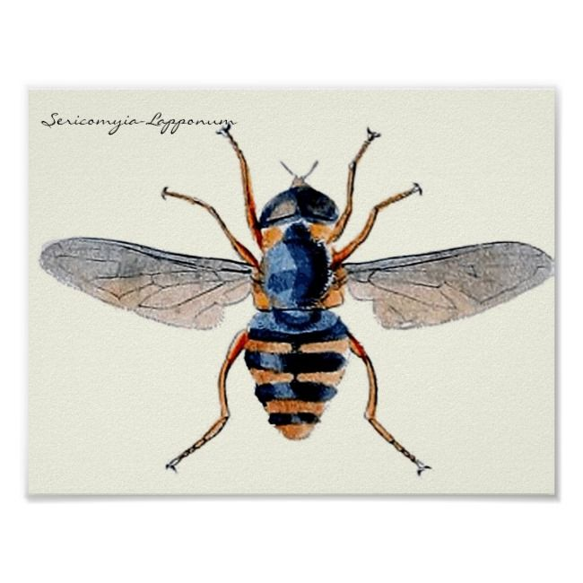 Vintage Insects Scientific Entomology Fly Poster |  Insects Scientific Entomology Fly Poster